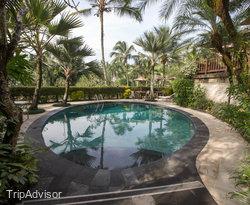The Pool at the Elephant Safari Park & Lodge