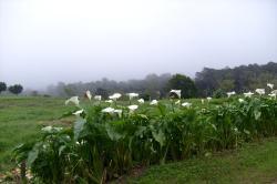 Finca lechera y Rancho Samaná