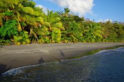 East Carib Dive