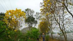 Xinpu Jupu Trail