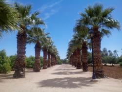 Sahuaro Ranch Park