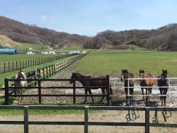Racing Horse Hometown Hidaka Tourist Information Center