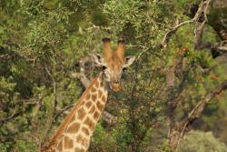Mthethomusha Game Reserve