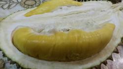 1 Malaysia Musang King Durian Orchard Farm