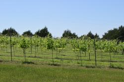 Majek Vineyard & Winery