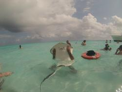 Carib Select Watersports - Stringray City