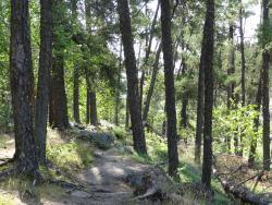 McGillivray Falls Self-guiding Trail