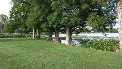 Lake Harris From Venetian Gardens Park, Leesburg, Florida