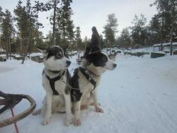 Guesthouse Husky - Day Tours