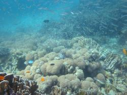 подводный мир Симилан