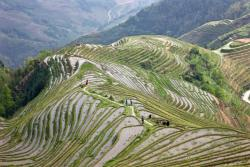 Rice terraces filled with water on April 11