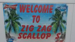 Zig Zag Scallop