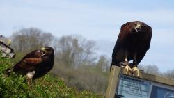 Kingsley Bird & Falconry Centre