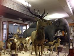 Le Musee d'Histoire Naturelle Victor Brun