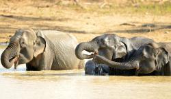 Elephants..