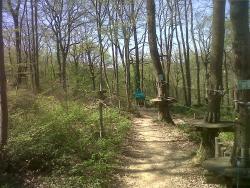 Accroforest