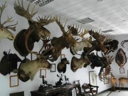Museo de Caza