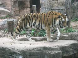 Guangzhou Zoo