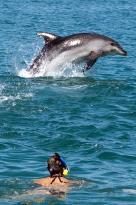 Наблюдение задельфинами икитами