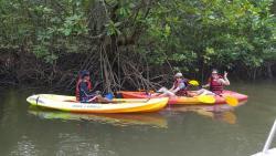 Langkawi Mangrove Tour by Bard