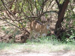 Sathyamangalam Tiger Reserve