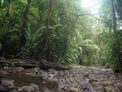 Costa Rica Natura- Day Tours