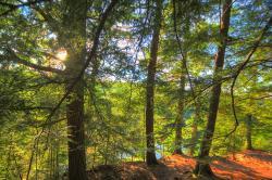 Hemlock Bluff Trail