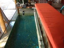 Fish spa.,