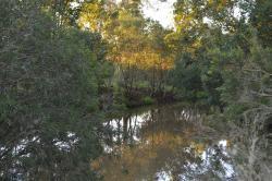 The Peterson Creek Walking Track