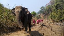 Elephant Caretaker Village - Day tour