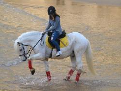 Palominas Atividades Equestres