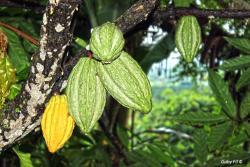 Fabrica de Chocolates Orquidea