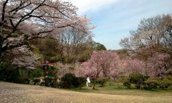 Aichi Prefecture Shinrin Park