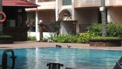 Pool and Pigeon