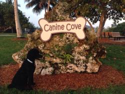 Canine Cove