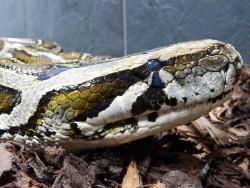 Snakes Alive Ltd
