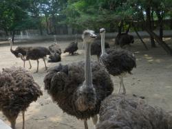 金鹭鸵鸟园