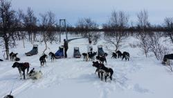 Are Sleddog Adventures - Day Tours