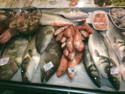 Fresh from Aegean Sea