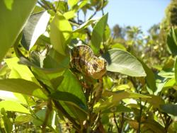 Chameleon we spotted in the gardens