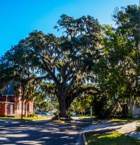 Live oaks with Spanish moss in historic downtown (133210838)