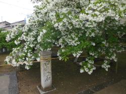 Okanominato Shrine