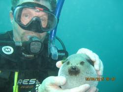 Fast and Fun Dive Centre