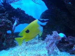 Aquarium of Constanta