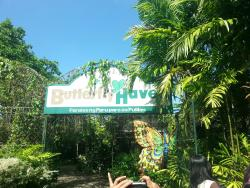Pulilan Butterfly Haven
