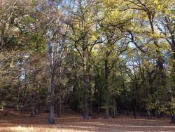 Cheviot Hills Reserve