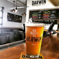 Darwin Brewing Company, Beer Garden, and Taproom