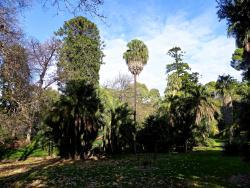 Ogród Botaniczny w Adelaide