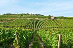 Vins d'Alsace Mosbach