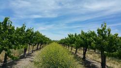 Steinbeck Vineyards & Winery